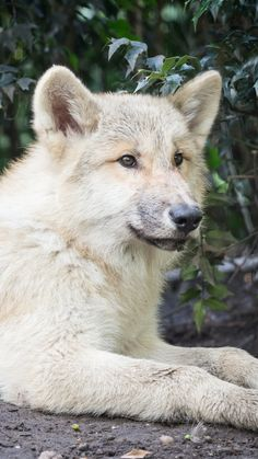 Animal/Wolf Wallpaper ID: 758879 - Mobile Abyss Wolf Wallpaper, Mobile Wallpaper, Werewolf, Husky, Grey Wolves, Wolves, Dogs, Animals, Wallpaper For Mobile