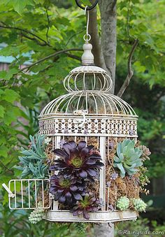 Plant Succulents In A Cage