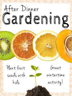 Planting seeds from everyday fruits can be a great activity to get your kids involved in gardening, especially during the winter.
