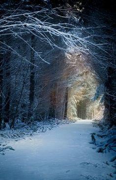 Snow Path,Washington-Usa