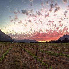 The official guide on things to do, places to see, the best restaurants to eat at, and everything you need to know about staying in Cape Town. Cape Town Tourism, Vineyard, Meet, Top, Outdoor, Instagram, Outdoors, Vine Yard, Vineyard Vines