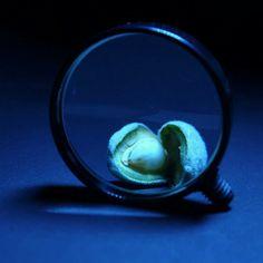 Macro shots with magnifying glass and 14-42mm lens  #macro #photo #makro #fotoğraf #deneme #greenalmond