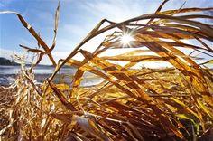 PRANOSTIKY NA STREDU 8.2.:  Keď je suchý február, je mokrý august