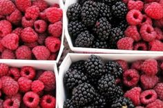 Juicy, sweet berries are highly perishable and are often a luxury item at the grocery store. Grow berries in your home garden instead, for a delicious summer treat that's packed with vitamins, fibe…