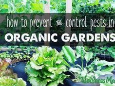 how to prevent and control pests in organic gardens