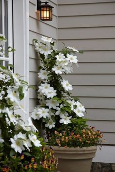 Love the idea of a clematis barrel by the door. Comes back every year! I would underplant with something green and trailing, maybe ivy?