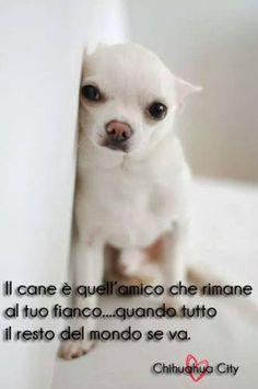 Scopri la vita da animali su FbSocialPet il social network per cani gatti cavalli e tutti gli animali domestici registrati nel branco e gioca con noi