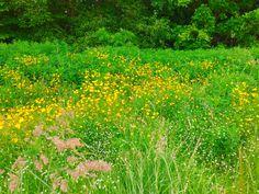 Summer flowers Summer Flowers, Vineyard, My Photos, Herbs, Outdoor, Outdoors, Herb, Outdoor Games, Outdoor Living