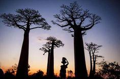 Madagascar 2013 Photo Tour http://www.photosfera.com