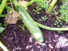 Call it zucchini or call it courgette, it still tastes the same.