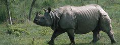 5. One-horned Rhino