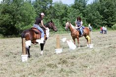 Horse Obstacle Course Training