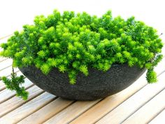5 Easy-Care Mini Succulent Garden Ideas: Potted up as patio accents or living centerpieces, succulents in containers can enhance your living spaces inside and out...