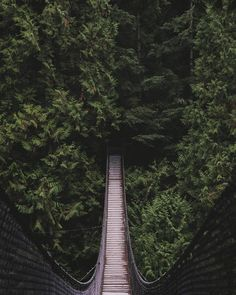 The Canyon (photo credit: Caitlin K.) - a beautiful shot of the suspension bridge at Lynn Canyon