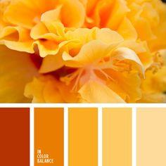 Paleta de cor, presente em academias - Cores quentes, mencionada no briefing como as cores que mais gosta pelo cliente.