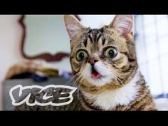Lil Bub & Friendz follows the life and times of Bub and examines the internet cat phenomenon.  A Film by Andy Capper and Juliette Eisner.