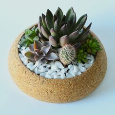 Large Cork Planter by Melanie Abrantes
