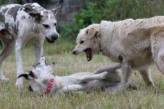 Aggressives Verhalten beim Hund - Was steckt dahinter? Goats, Animals, Taurus, Pet Dogs, Animales, Animaux, Animal, Animais, Goat