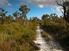 The Bibbulmun Track - South of Northcliffe Western Australia, The World's Greatest, Long Distance, Trail, Scenery, Coast, Country Roads, Landscape, Paisajes