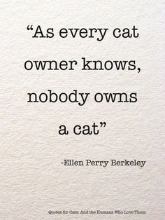 cat quotes 25 Inspirational Advice Given By The Pets In Your Life - I Can Has Cheezburger Cat Quotes, Animal Quotes, Funny Quotes, Cat Sayings, Risk Quotes, Crazy Cat Lady, Crazy Cats, Game Mode, Grand Chat