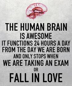How The Human Brain Works  - funny pictures #funnypictures