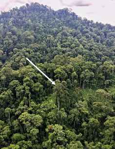 TOP 10 HAPPY ENVIRONMENTAL STORIES OF 2016 - tallest-tree-in-tropics-helicopter-photo-gasner-copy