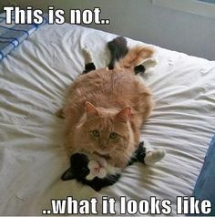 Caught my cats doing this once!