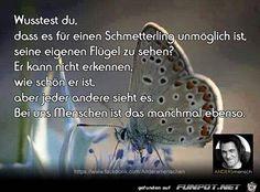 ein Bild für's Herz 'Wußtest Du, dass es für einen Schmetterling.jpg' von Renilinz. Eine von 9891 Dateien in der Kategorie 'Sprüche' auf FUNPOT.