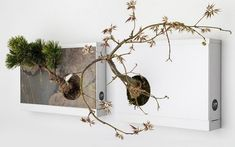Wall-Bonsai-Planter-2