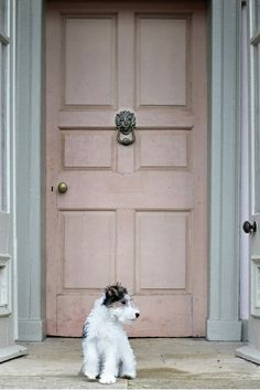 "wire fox terrier puppy / pink door: ""Why yes, that is my house and yes, that is… Fox Terriers, Wire Fox Terrier Puppies, Chien Fox Terrier, Wirehaired Fox Terrier, I Love Dogs, Puppy Love, Cute Dogs, Adorable Puppies, Dogs And Puppies"