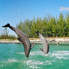 freeport, the bahamas     Tips how to enjoy traveling, vacations,camping, resorts,and cruises.  http://travelexcitingplaces.blogspot.com