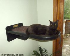 Cat Perch from The Vertical Cat by TheVerticalCat on Etsy https://www.etsy.com/listing/179843129/cat-perch-from-the-vertical-cat
