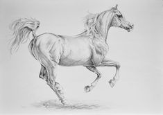 Signature 2 by NutLu on DeviantArt Horse Drawings, Animal Drawings, Arabian Art, Black And White Landscape, Bristol Board, Happy Art, White Horses, Equine Art, Beautiful Drawings