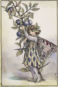 Illustration for the Sloe Fairy from Flower Fairies of the Autumn. A girl fairy stands holding a branch of a blackthorn tree.    Author / Illustrator  Cicely Mary Barker