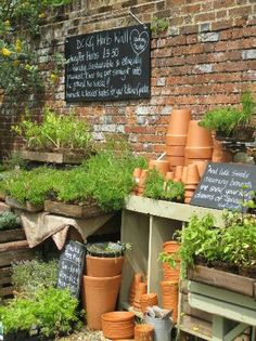 Nice mix of herbs and the materials you need to pot them.