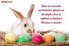 Happy Easter Images and Pictures easter bunny pictures Funny Easter Bunny, Easter Bunny Pictures, Hoppy Easter, Easter Eggs, Bunny Paws, Bunnies, Easter 2018, Easter Sale, Easter Party
