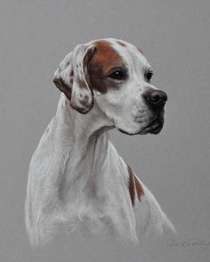 Английски пойнтер / English Pointer by Claire Verity http://www.turmericfordogs.com/blog