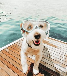 Find images and videos about fashion, cute and style on We Heart It - the app to get lost in what you love. Super Cute Puppies, Cute Baby Dogs, Cute Little Puppies, Super Cute Animals, Cute Dogs And Puppies, Cute Little Animals, Cute Funny Animals, Doggies, Baby Animals Pictures