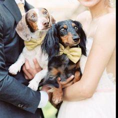 #wedding #ido #pet #dog #bowtie #cute #beauty #shop #online #ladogstore #bestfriend
