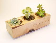 Wood Planter Set Succulent Garden Indoor Planter Cactus