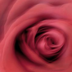 I shook my camera to take the photo Framed Prints, Canvas Prints, New Kids, Amazing Flowers, Order Prints, Rose, Pink, Photo Canvas Prints, Roses