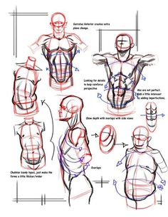 Enjoy a collection of references for Character Design: Male Anatomy. The collection contains illustrations, sketches, model sheets and tutorials... This ga