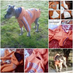 DIY Dog Hoodie Coat - Best stuff for Dogs and Dog Lovers! Dog Hoodie, Dog Shirt, Fleece Dog Coat, Old Shirts, Dog Jacket, Dog Sweaters, Dog Dresses, Pet Clothes, Dog Clothing