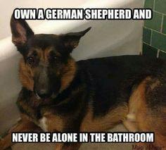 German shepherd owner never alone in the bathroom