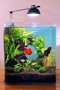 15 Stunning Aquarium Design Ideas for Indoor Decorations – Architecture Designs – aquascaping Betta Aquarium, Planted Aquarium, Aquarium Nano, Saltwater Aquarium, Planted Betta Tank, Aquarium Filter, Aquariums Super, Amazing Aquariums, Tanked Aquariums