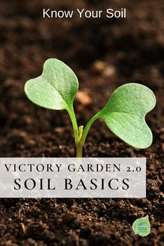 Building Your Garden from the Ground Up: Basic Tips for Improving Garden Soil Quality. Understanding your soil's fertility and improving its quality is the first step in creating a thriving, vibrant, and productive garden. Backyard Plan, Backyard Landscaping, Garden Soil, Garden Plants, Organic Gardening, Gardening Tips, Sustainable Gardening, Victory Garden, Soil Improvement