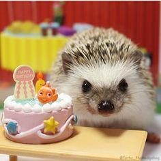 23 Novembre 2016 Happy 3rd birthday✨✨✨ #turbo_thehedgehog