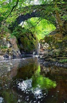 L'immagine può contenere: albero, pianta, spazio all'aperto, acqua e natura