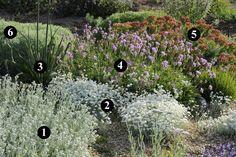 1 : Tanacetum densum subsp. amanii  2 : Achillea umbellata  3 : Asphodelus microcarpus  4 : Centaurea bella  5 : Euphorbia rigida  6 : Santolina neapolitana 'Edward Bowles'