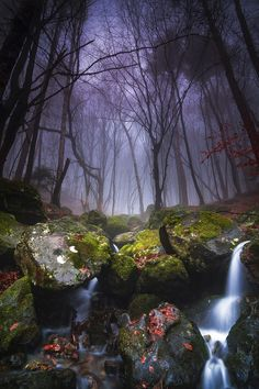 Another misty morning by Nikolay on 500px... Bulgaria..